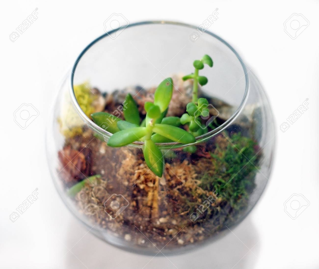 Small Terrarium Isolated Against White Background From Above Stock