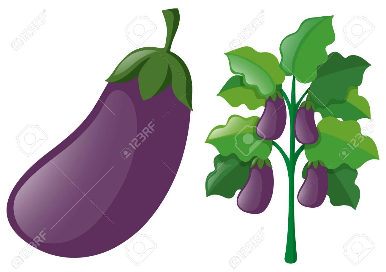 Eggplants On The Tree Illustration Royalty Free Cliparts Vectors