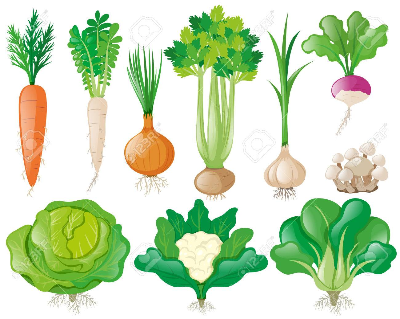 野菜イラストの種類のイラスト素材ベクタ Image 75094959