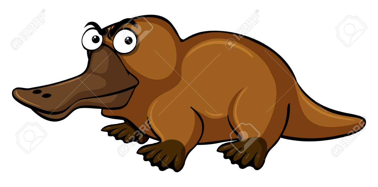 platypus with serious face illustration royalty free cliparts rh 123rf com cute platypus clipart platypus clipart black and white