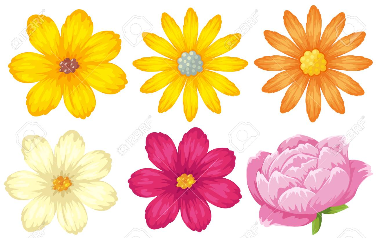 Different Kinds Of Flowers In Yellow And Pink Illustration Royalty