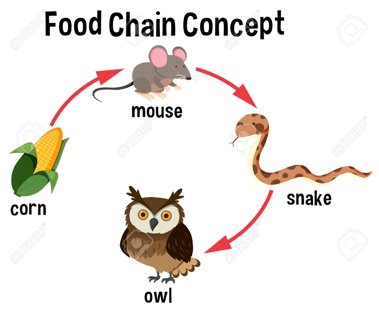 Food Chain Concept Diagram Illustration Royalty Free Cliparts, Vectors, And  Stock Illustration. Image 104709834.123RF.com
