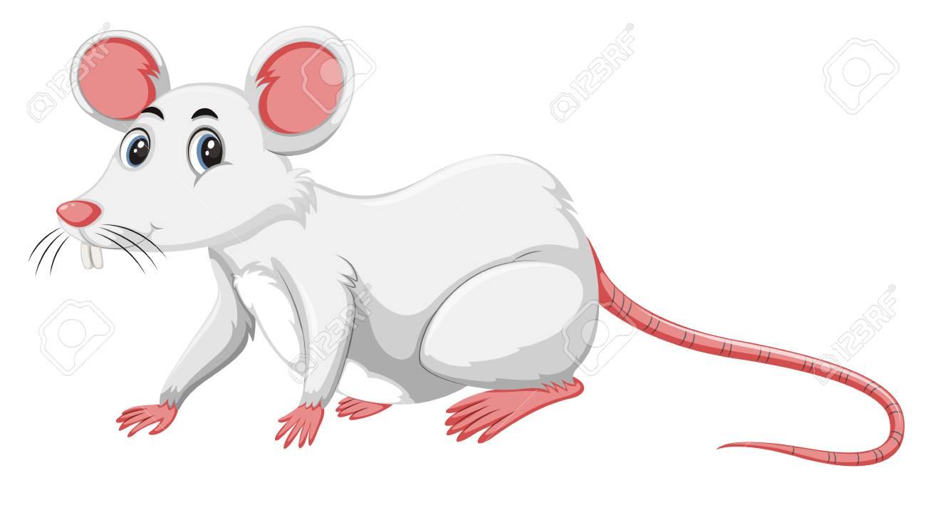 A white rat on white background illustration - 108499291
