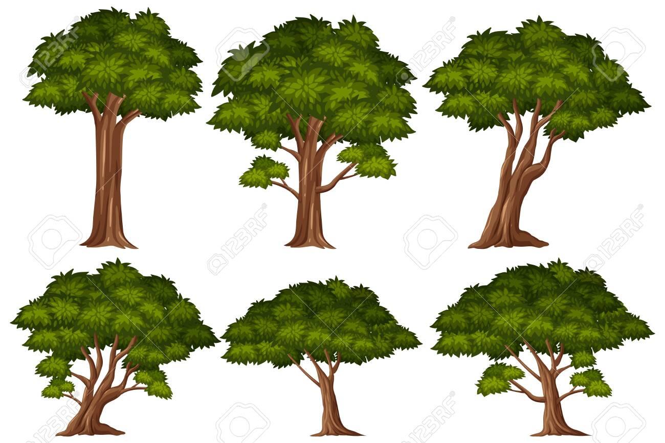 Big green trees on white background illustration - 147707300