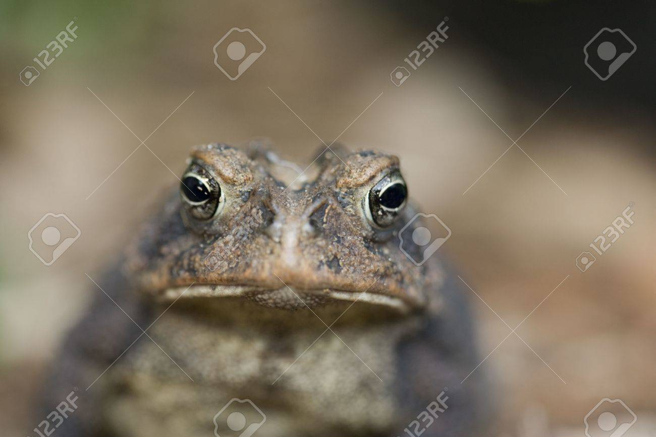 A macro view of a toad. Stock Photo - 3132823