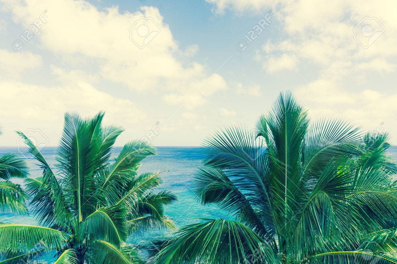Retro Effect Faded Colors In Tropical Scene Palm Trees And Fronds ...