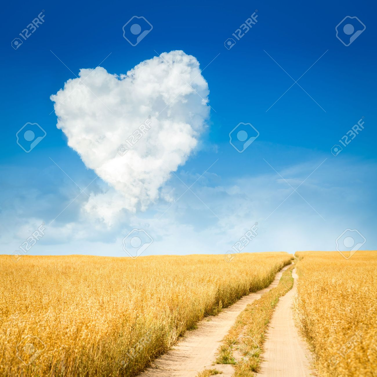 Heart Shaped Cloud and Yellow Field Landscape. Summer Blue Sky with Copy Space. Love and Valentine's Day Concept. - 51997081