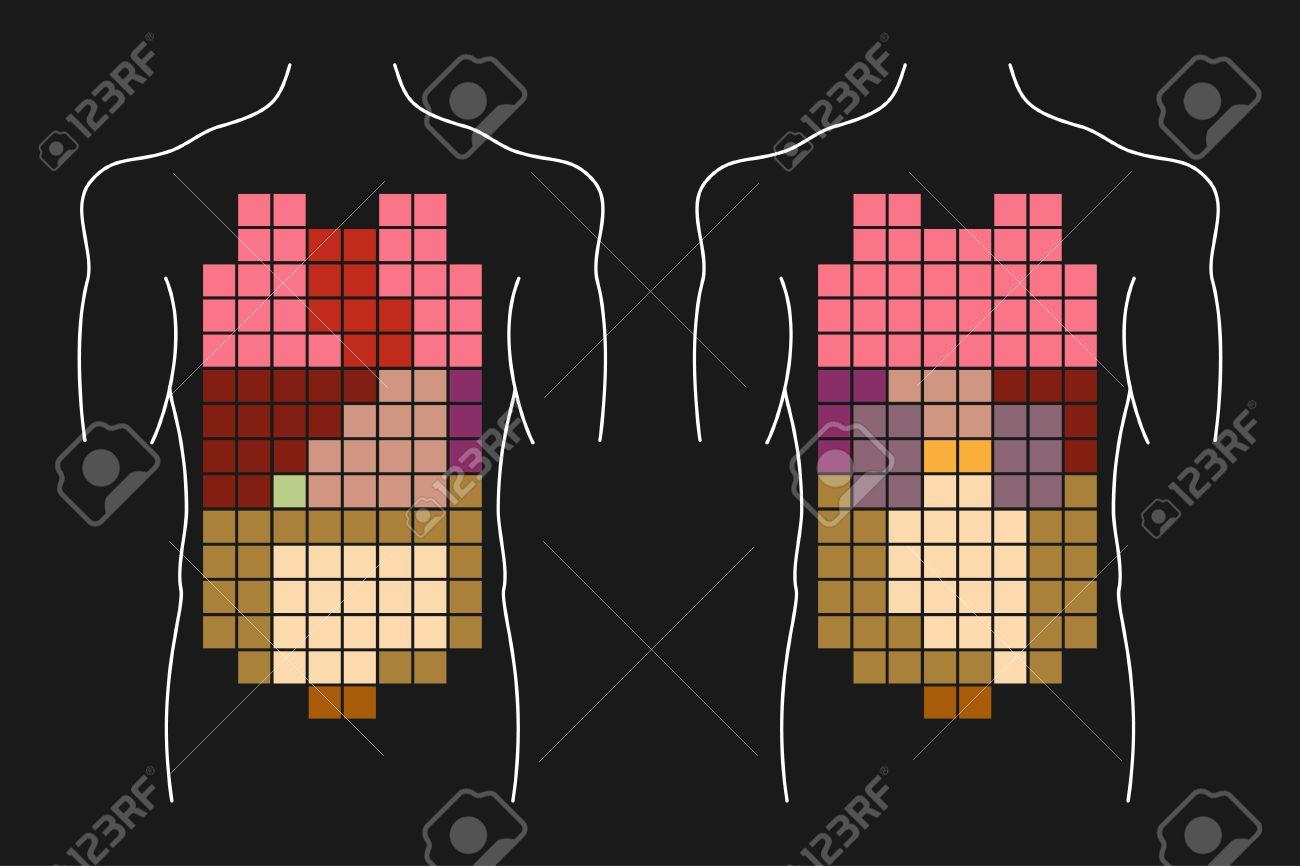 Human Body Internal Organs Layout Anterior And Posterior Views