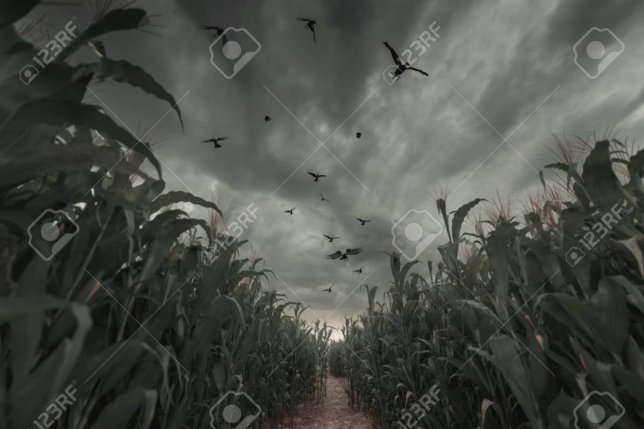 3d Rendering of aisle in the middle of green cornfield in front of dramatic sky and flying crows. Selective focus - 130047842