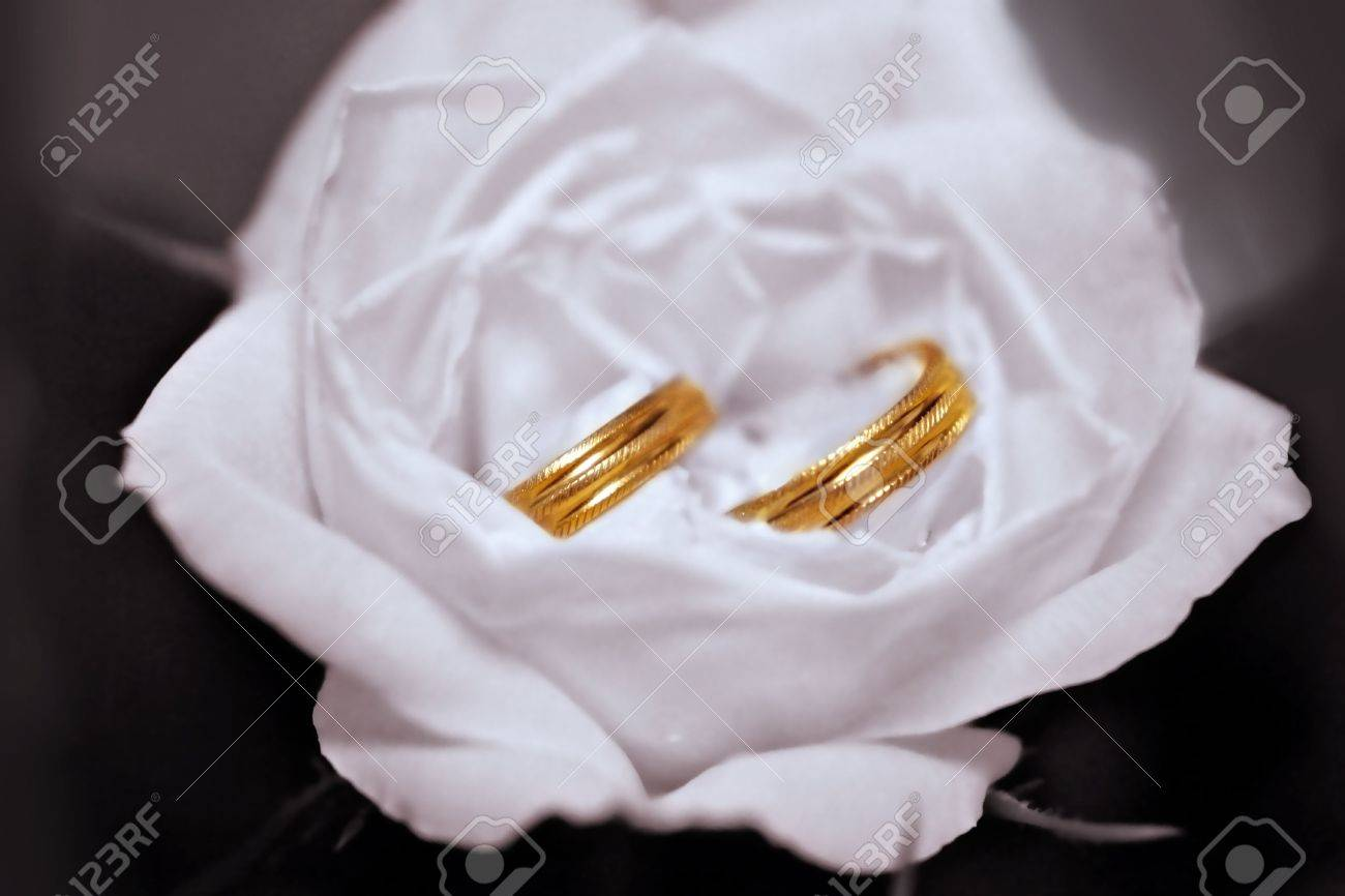 Two wedding rings in White Rose Stock Photo - 659136