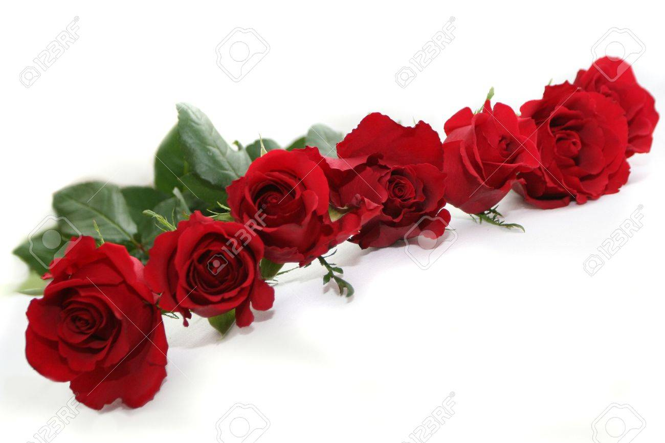 garland of deep red roses Stock Photo - 697330