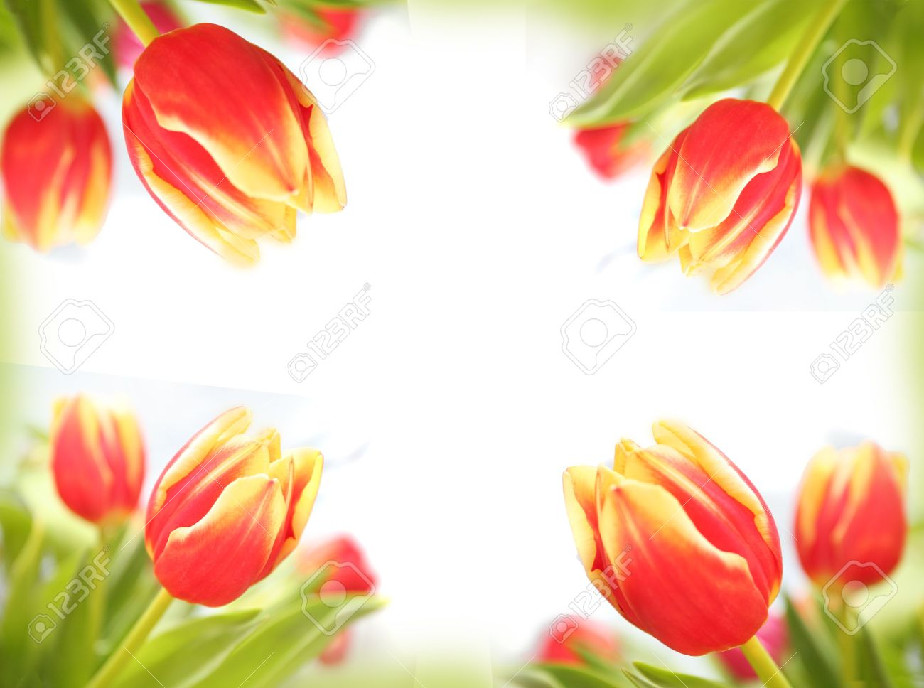 Spring tulips beautiful colorful flowers making border framed isolated love letter horizontal background Stock Photo - 902729