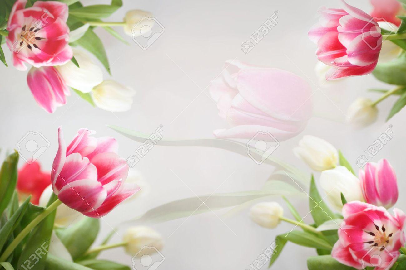 Printemps Belle Fleur Tulipes Fleurs Colorees Dans Le Cadre Des