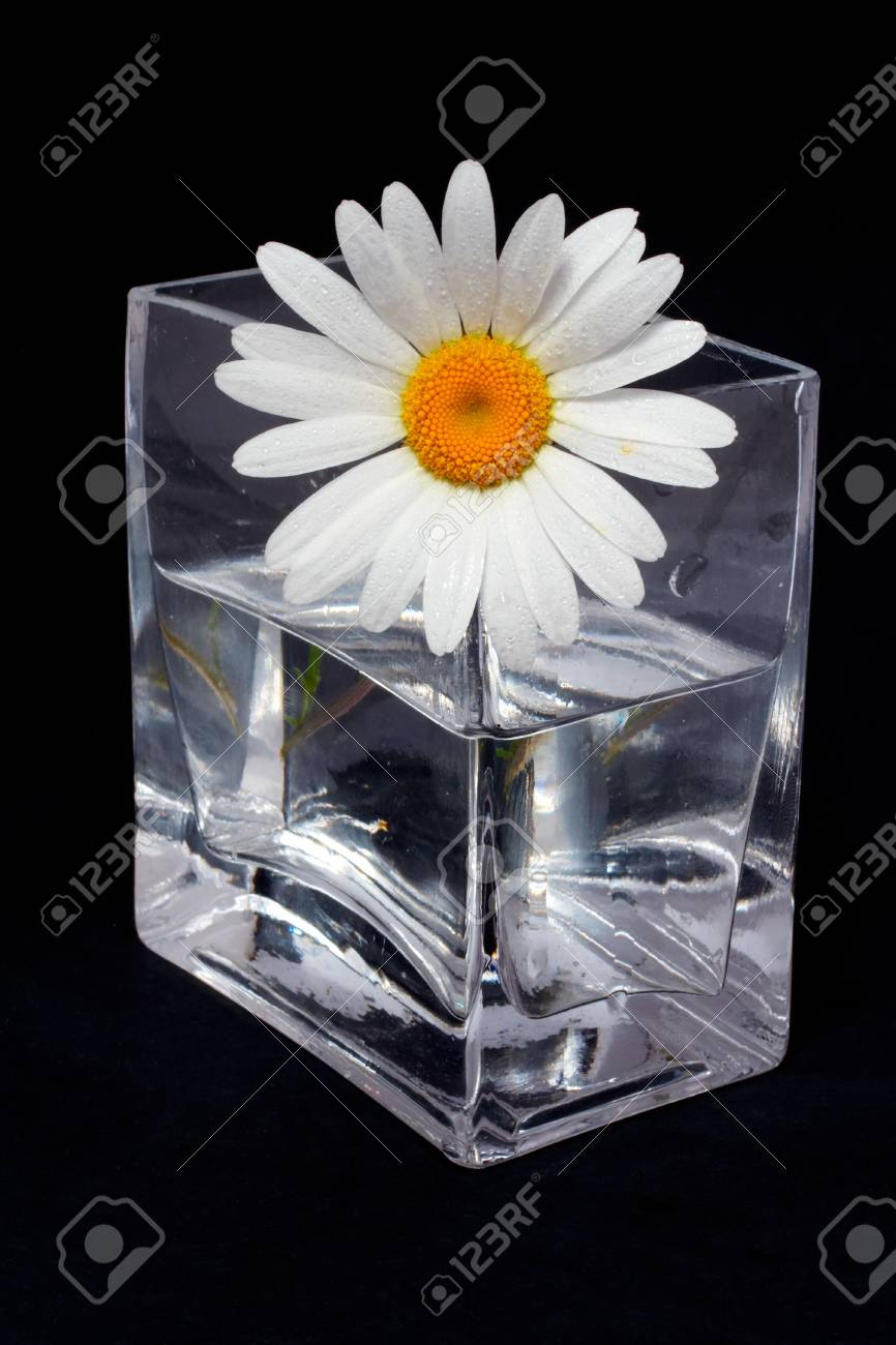 Daisy in the vase on black background Stock Photo - 417879