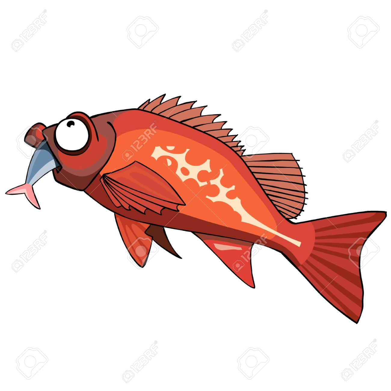 Red Grouper Fish | Cartoon Red Grouper Fish Eating Royalty Free Cliparts Vectors And