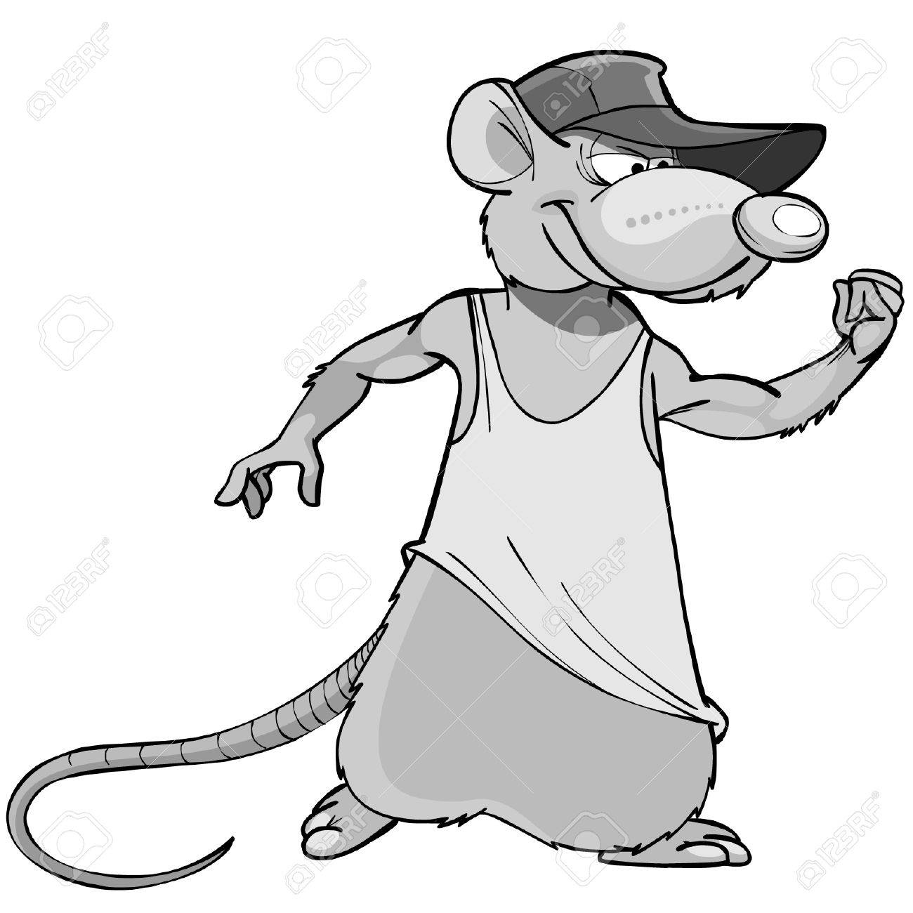 opossum stock photos royalty free opossum images and pictures