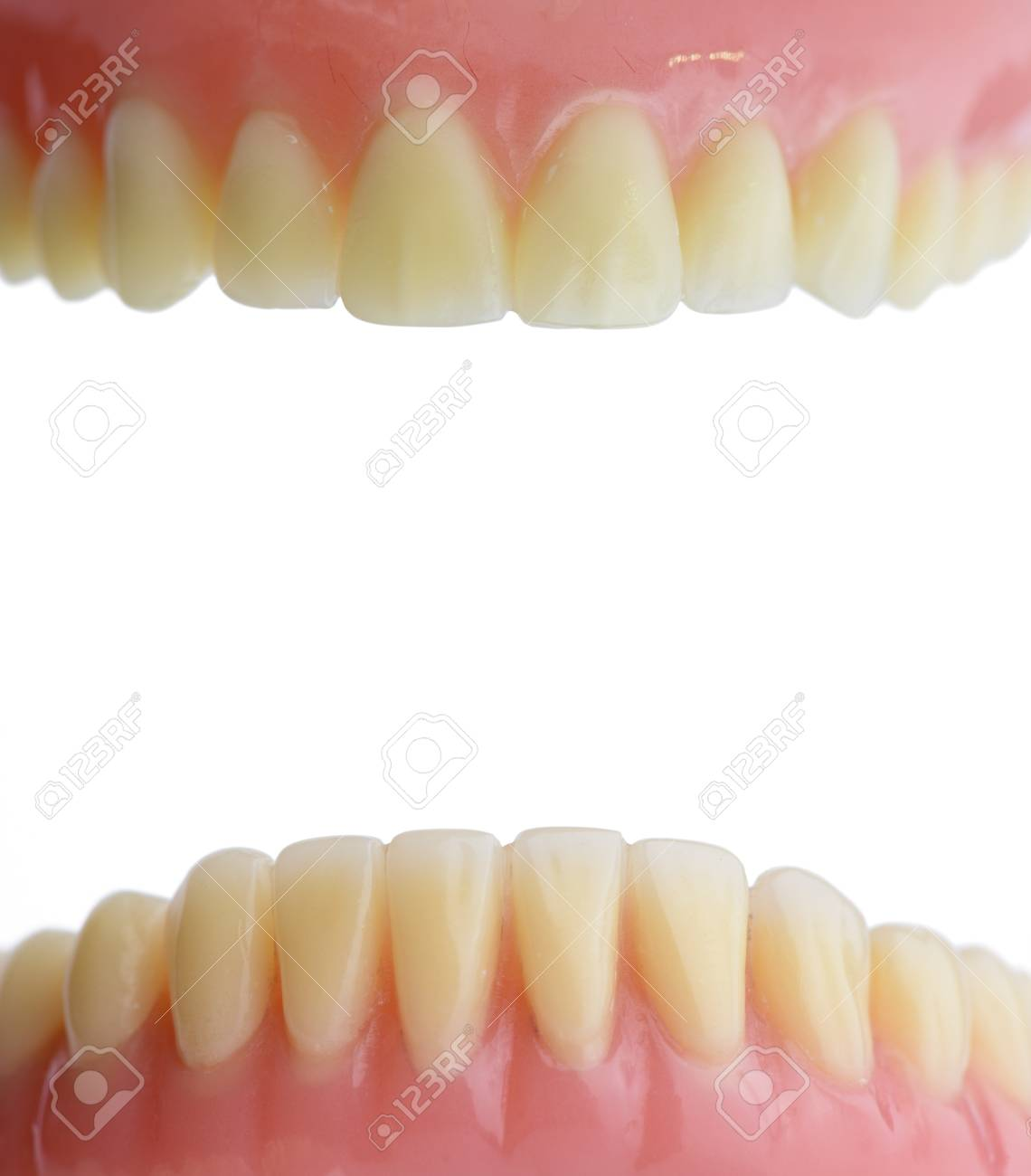 Teeth Gum Human Mouth Anatomy. Isolated On White Background. Stock ...