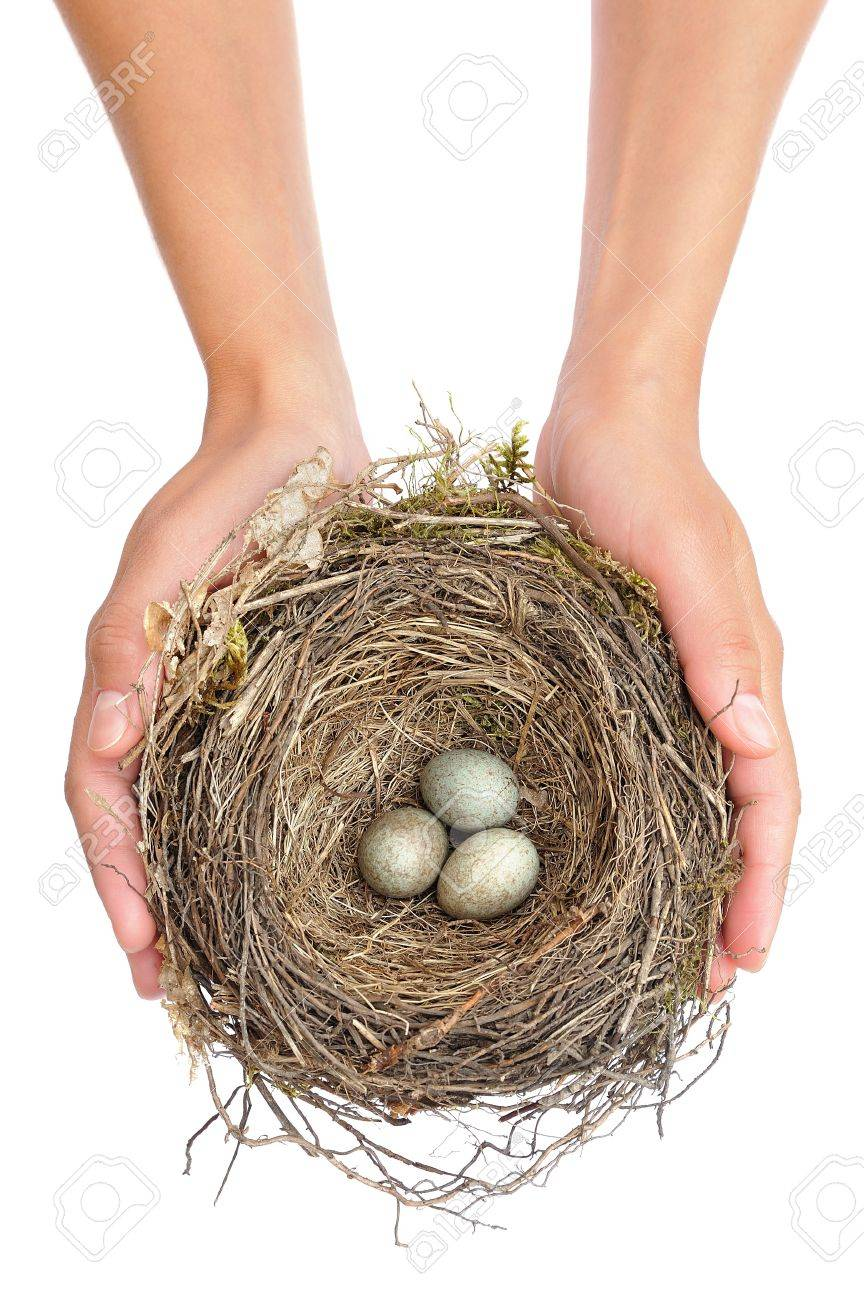 Young woman holding blackbird nest over white background Stock Photo - 10682392