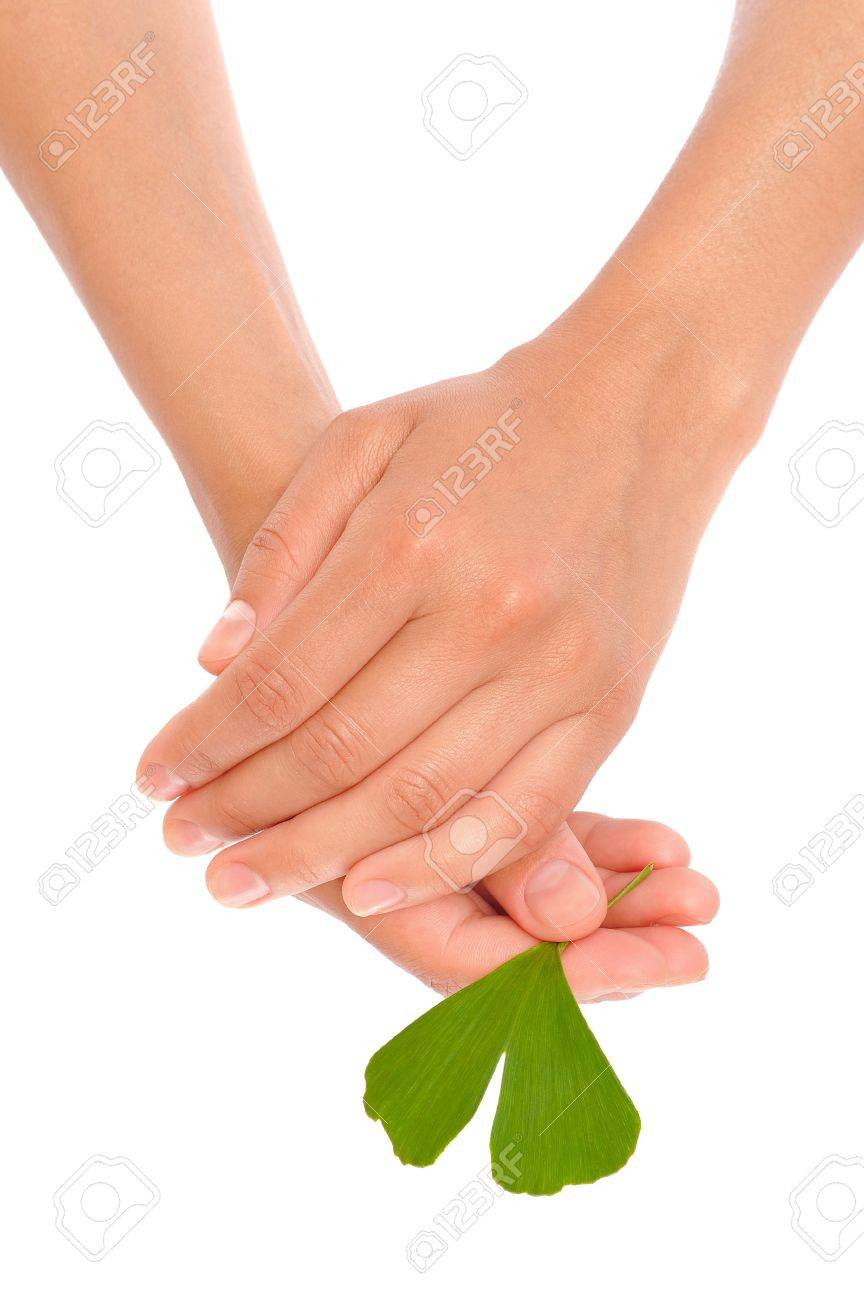 Hands of young woman holding ginkgo leaf Stock Photo - 10682376