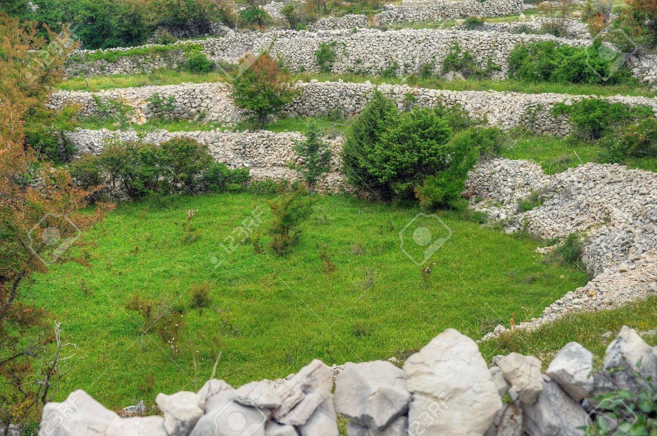 Sheep pasture, drystone walls, Rudine, Krk island, Croatia Stock Photo - 16388869