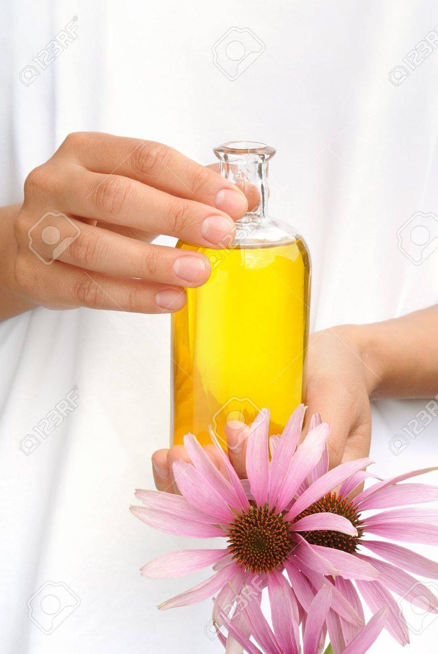 Hands of young woman holding essential oil and fresh coneflowers Stock Photo - 17078849