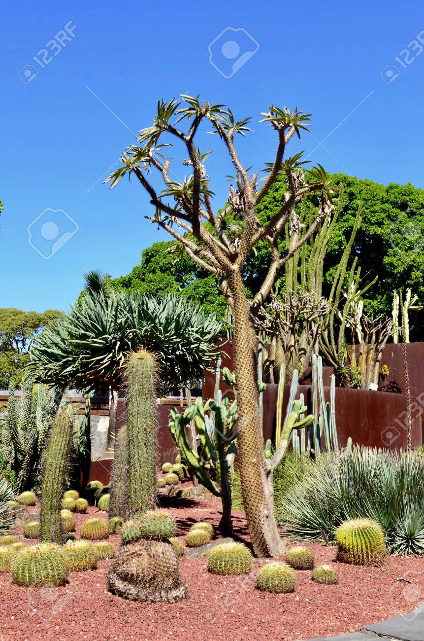 A View Of Cacti On Display In The Succulent Garden Of The Royal