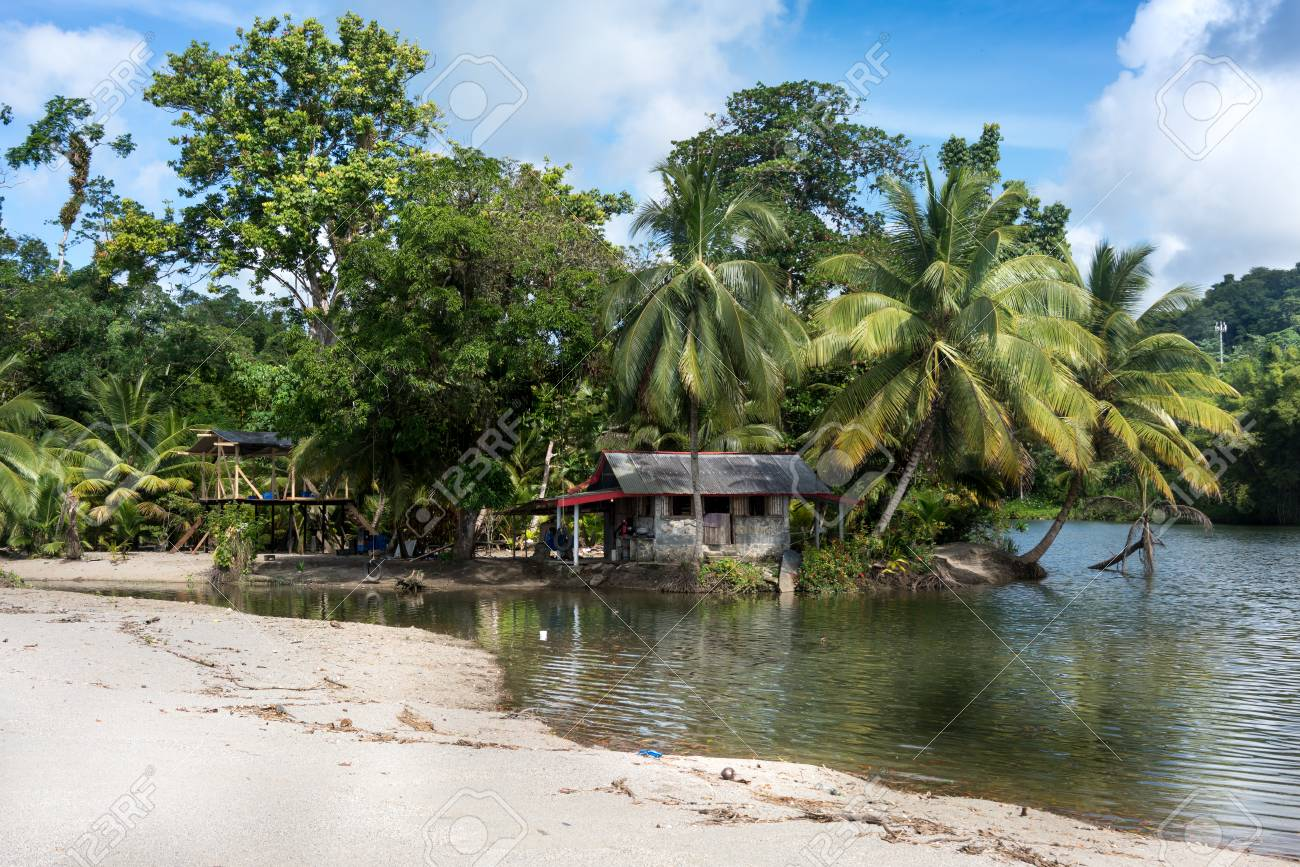 Scenic view of beach with palm trees and tourist resort, Trinidad, Trinidad and Tobago - 51447414