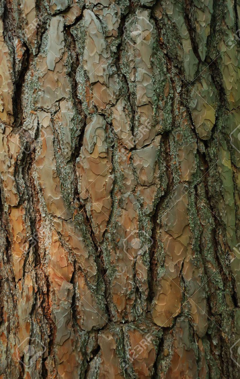 Close-up of a fir tree bark Stock Photo - 7567585