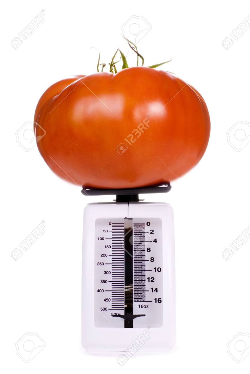 Big Brandywine Heirloom Tomato on a Kitchen Scale Stock Photo - 7847330