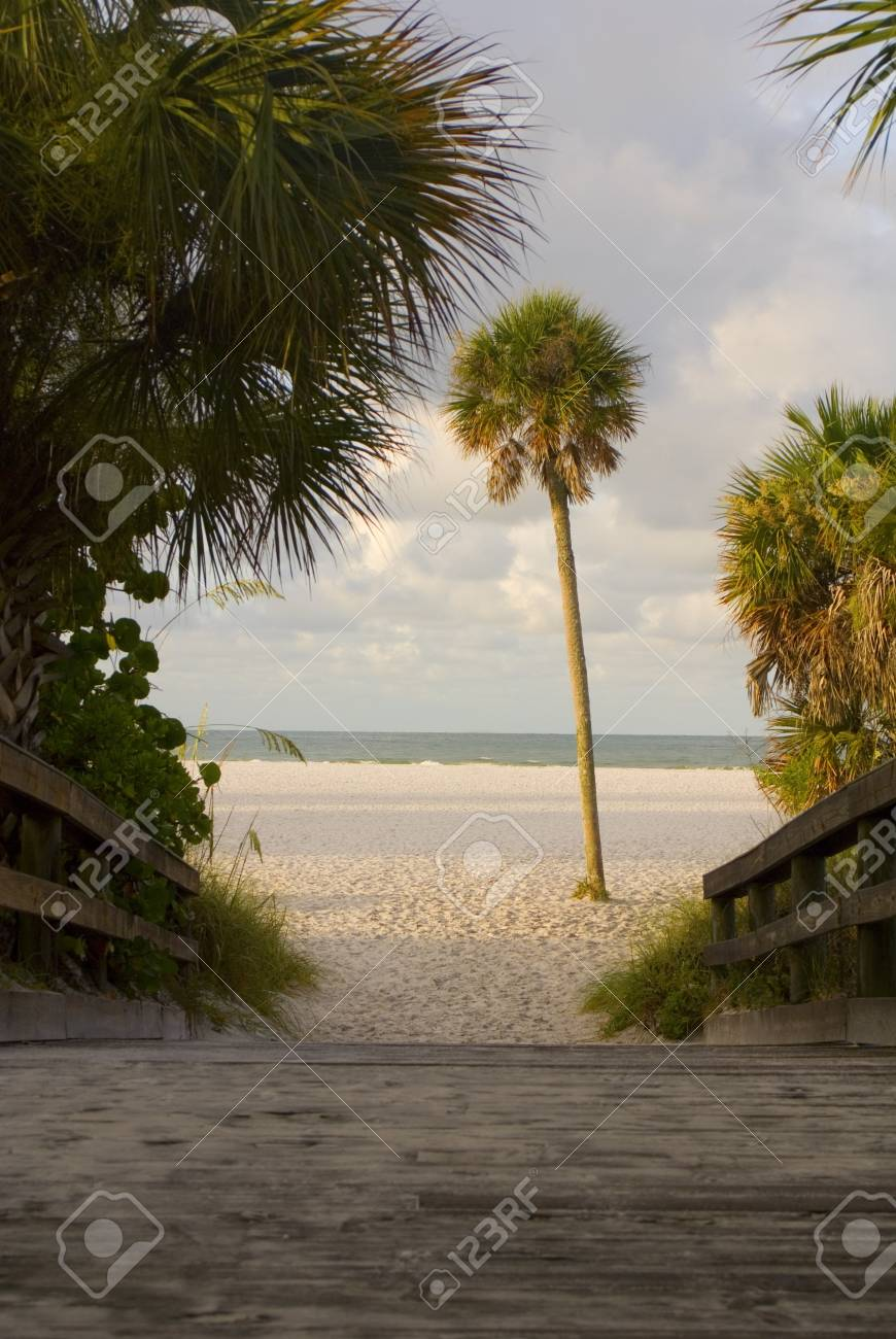 A wooden path to a sunny empty beach framed by palms Stock Photo - 13332574