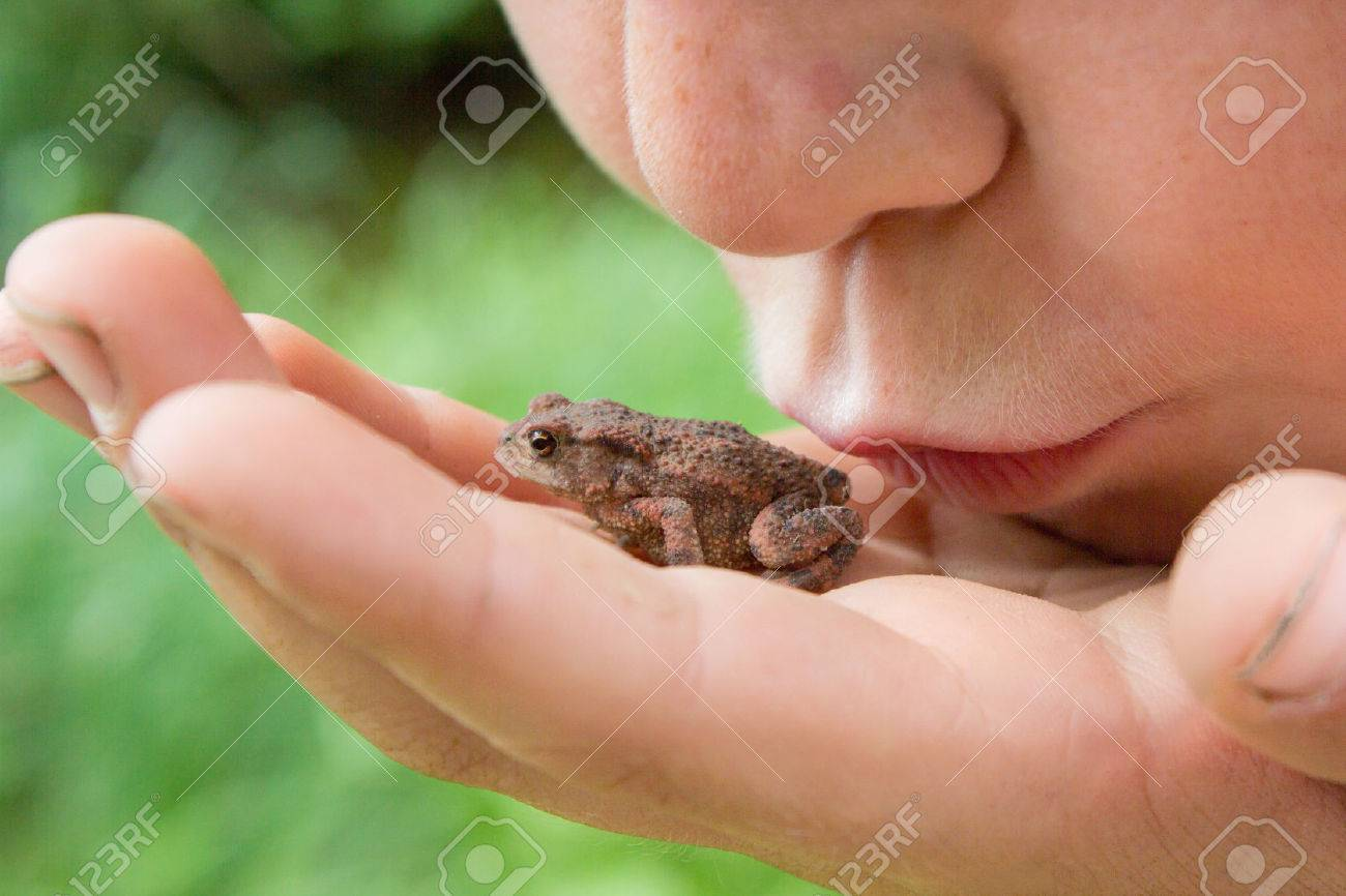 frog warts images u0026 stock pictures royalty free frog warts photos