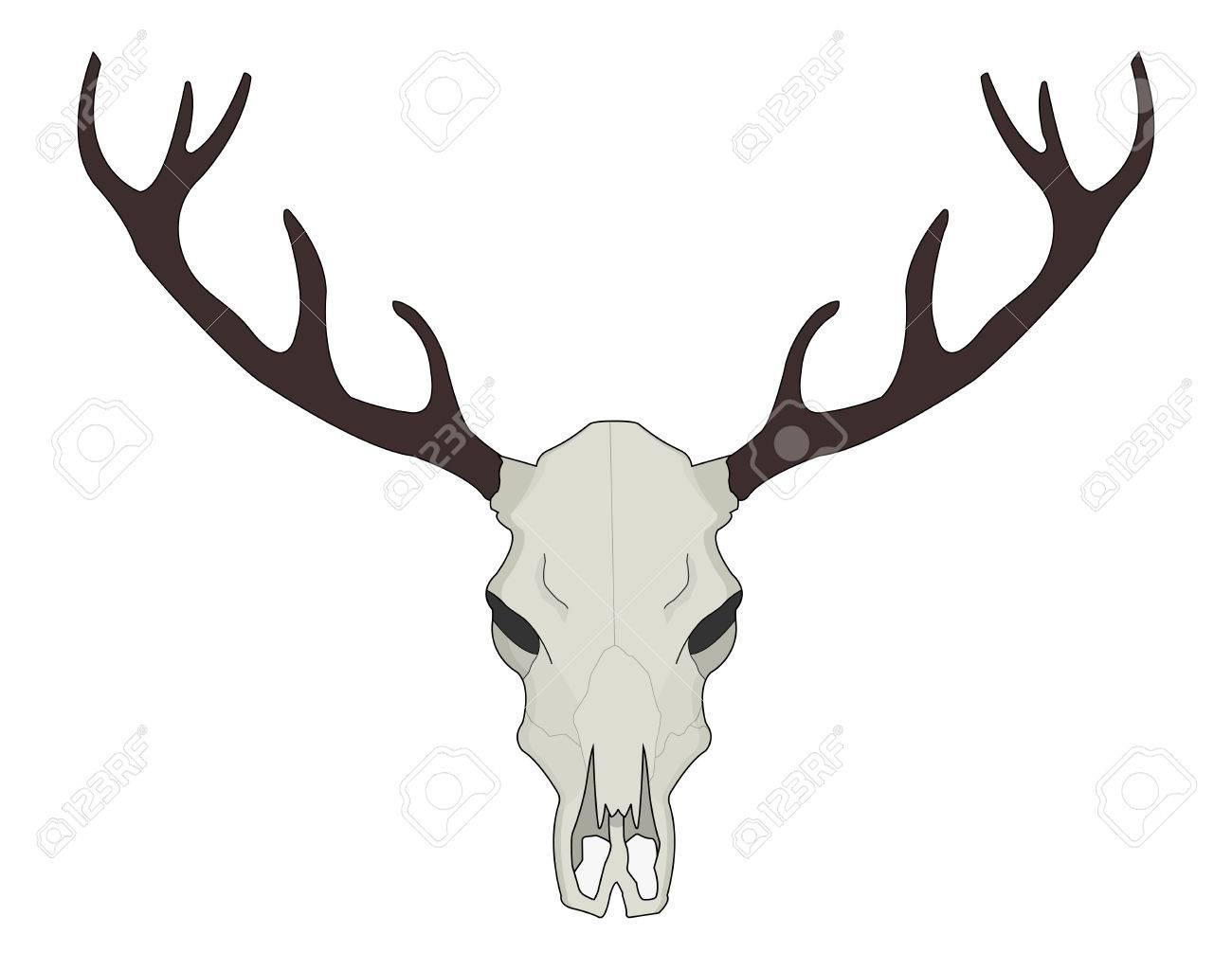 deer skull vector illustration isolated on white royalty free rh 123rf com deer skull vector art deer skull vector art
