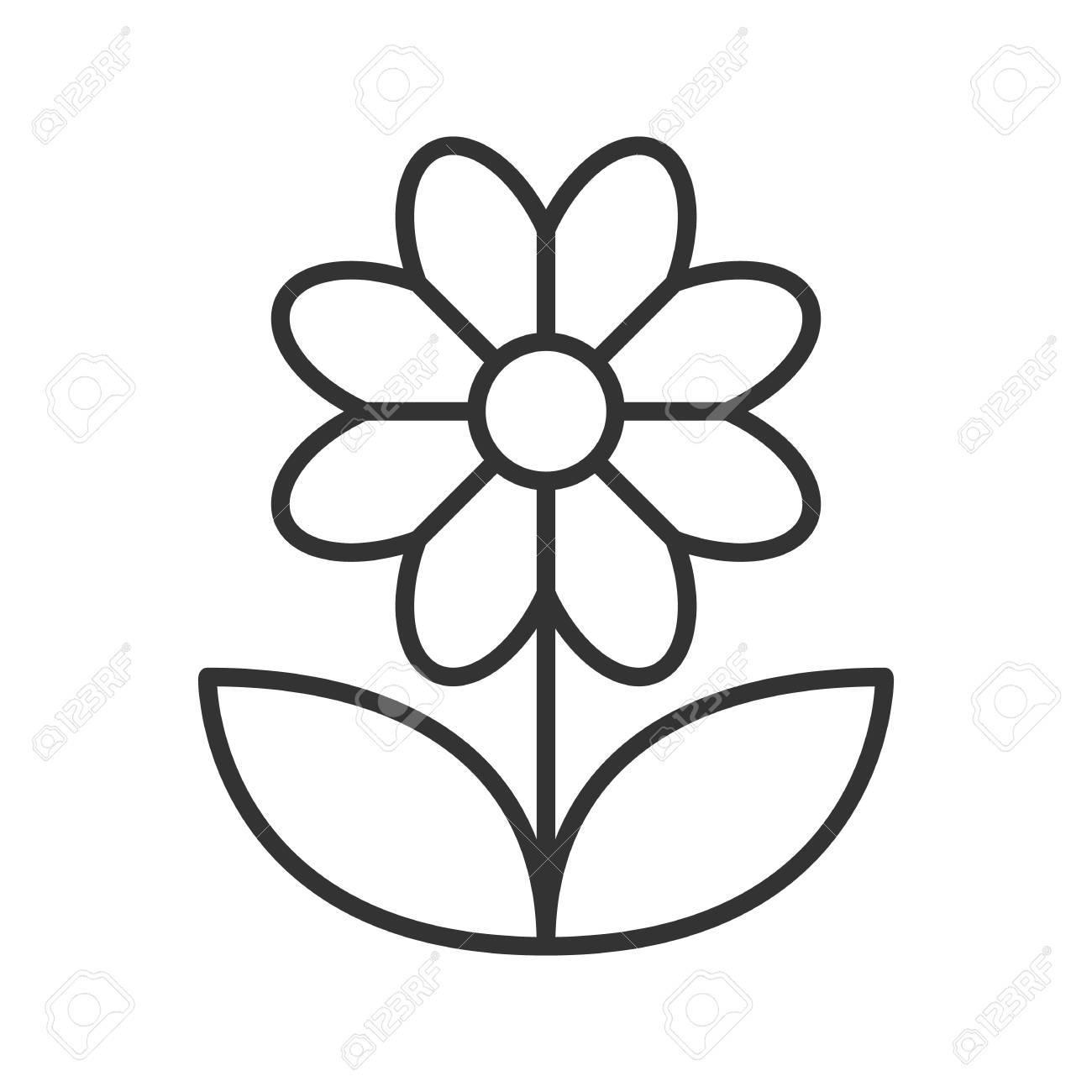 Camomile linear icon. Thin line illustration. Flower contour..