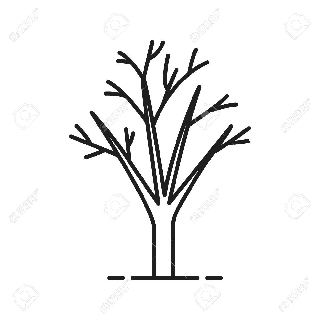 Rbol Sin Hojas Icono Lineal Ilustración De Línea Delgada Símbolo