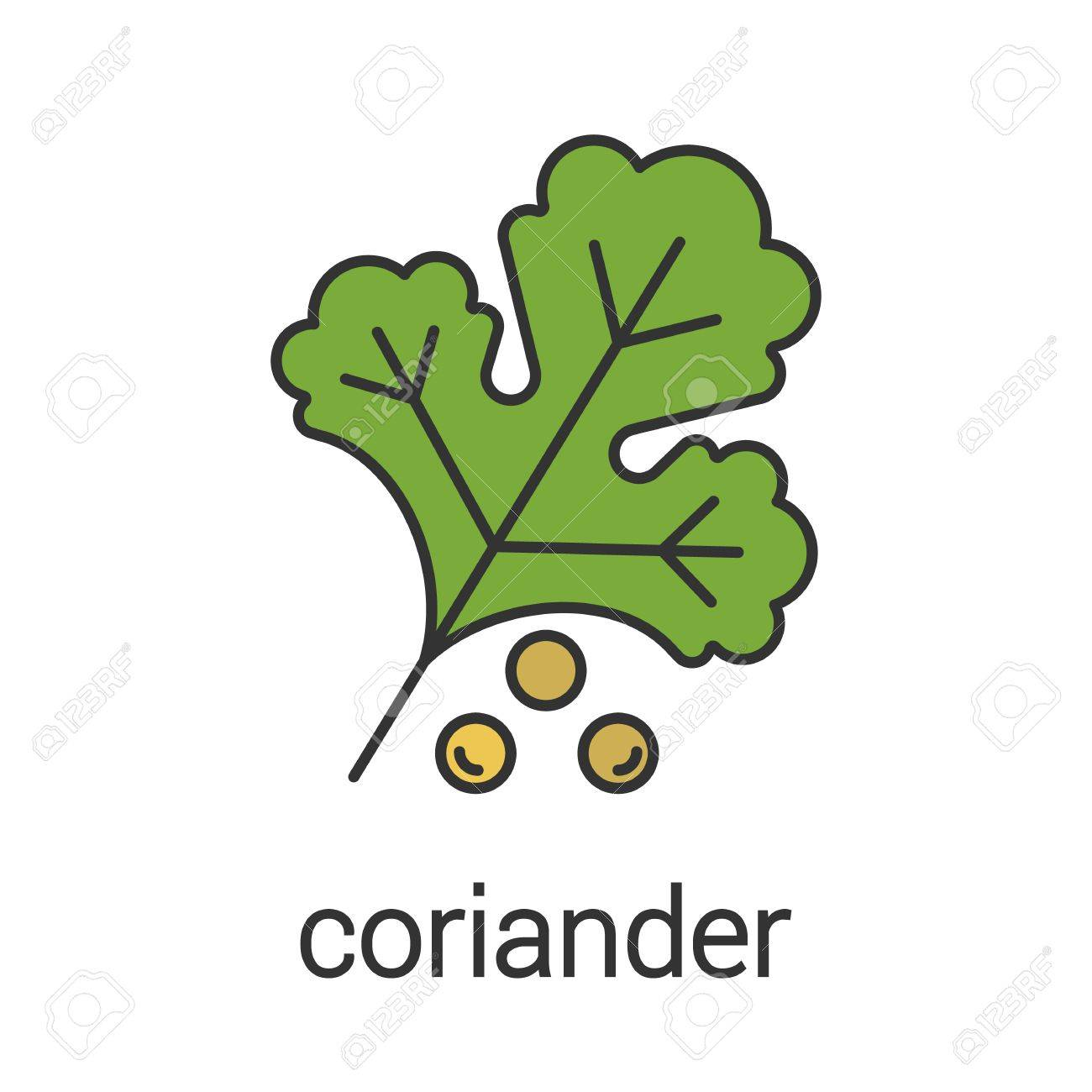 icône de couleur coriandre. arôme, assaisonnement illustration