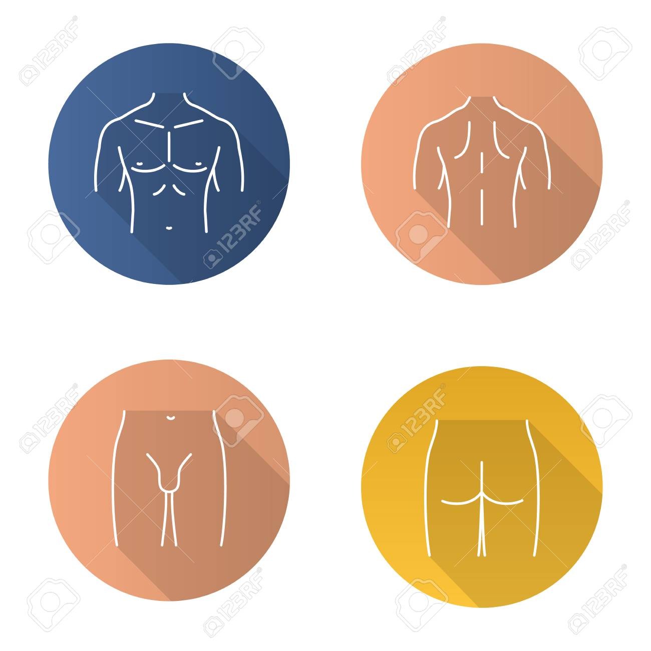 Male body parts flat linear long shadow icons set. Muscular chest, back, groin, butt. Vector outline illustration - 88832542