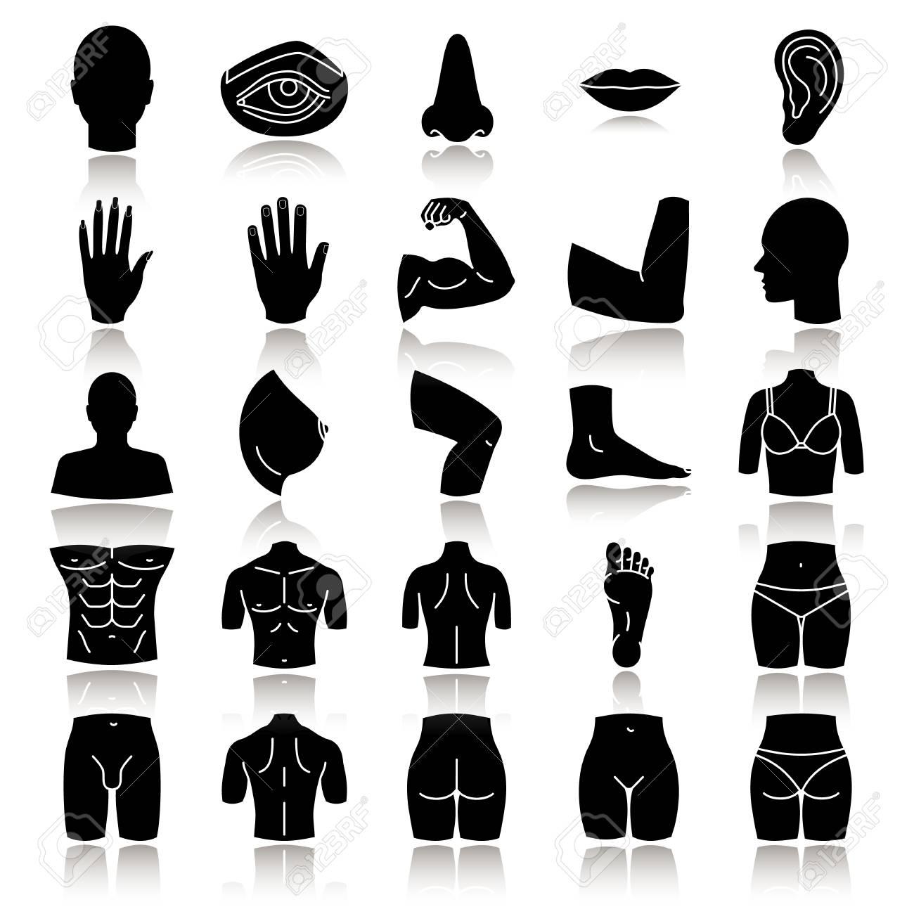 Body Parts Drop Shadow Black Glyph Icons Set. Anatomy. Health ...
