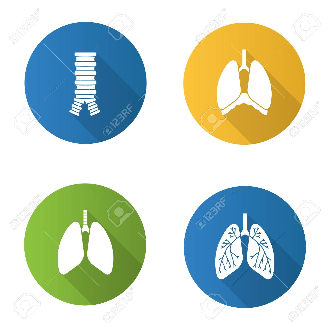 6351fd2eaa8 Vector silhouette illustration. Internal organs flat design long shadow  glyph icons set. Respiratory system. Trachea
