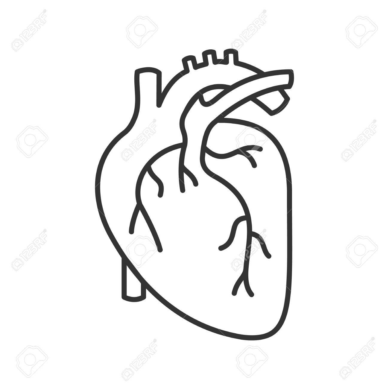 Human Heart Anatomy Linear Icon. Thin Line Illustration. Contour ...