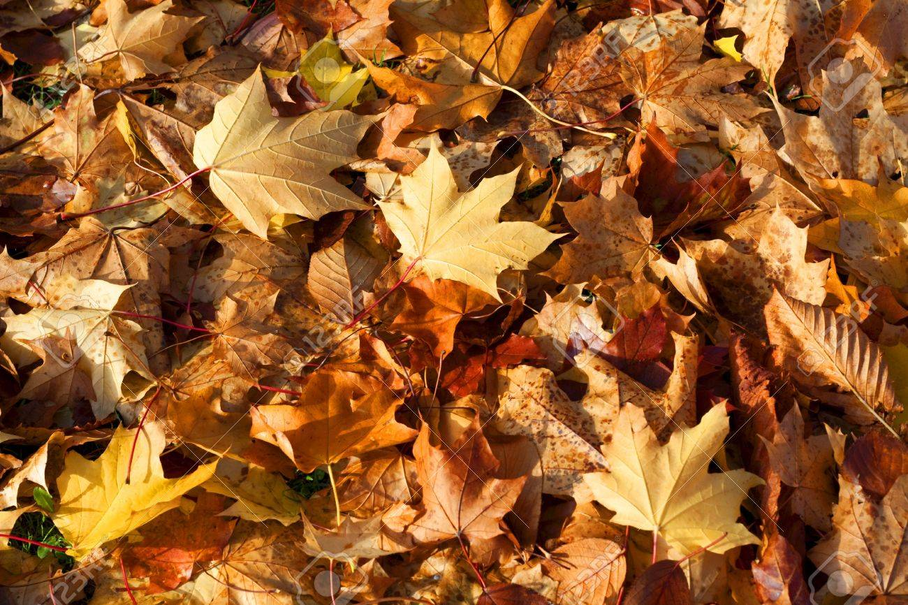 Pile of golden autumn leaves, suitable as a background Stock Photo - 6079791