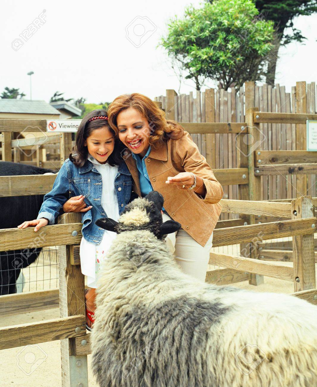 Mother and daughter looking at sheep behind a fence Stock Photo - 16044701