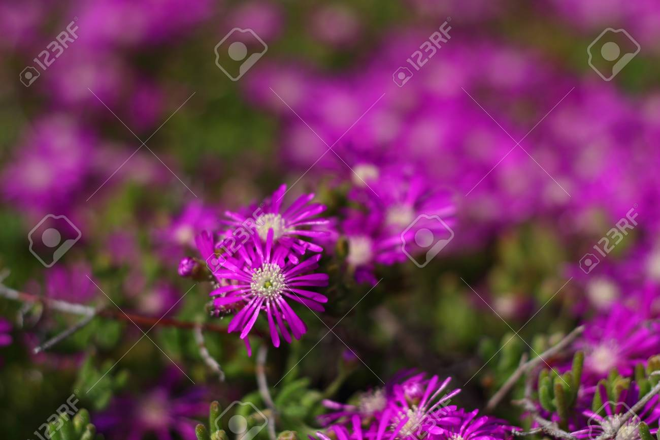 Beautiful flowers blooming in the garden stock photo picture and beautiful flowers blooming in the garden stock photo 96151576 izmirmasajfo