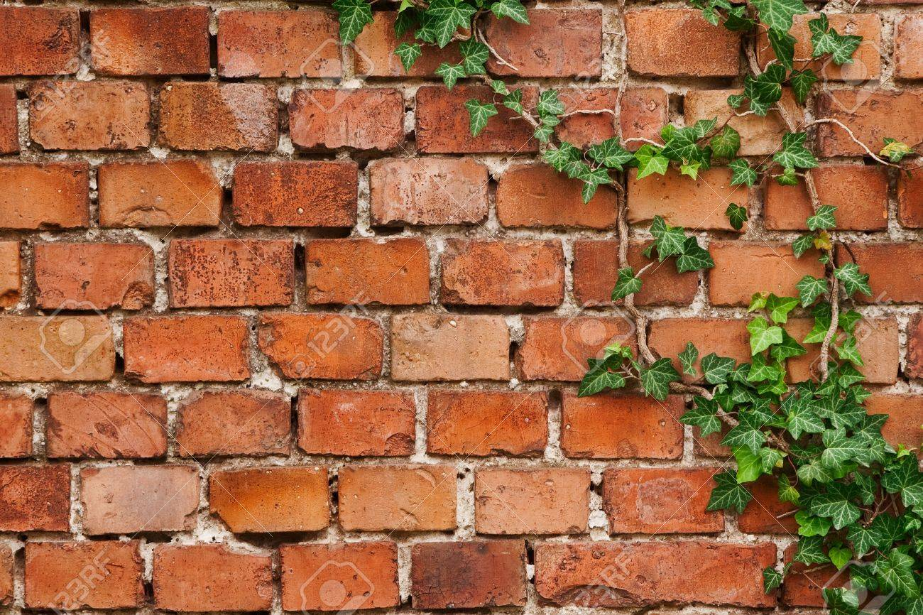 Old brick wall texture with creep Stock Photo - 8046485