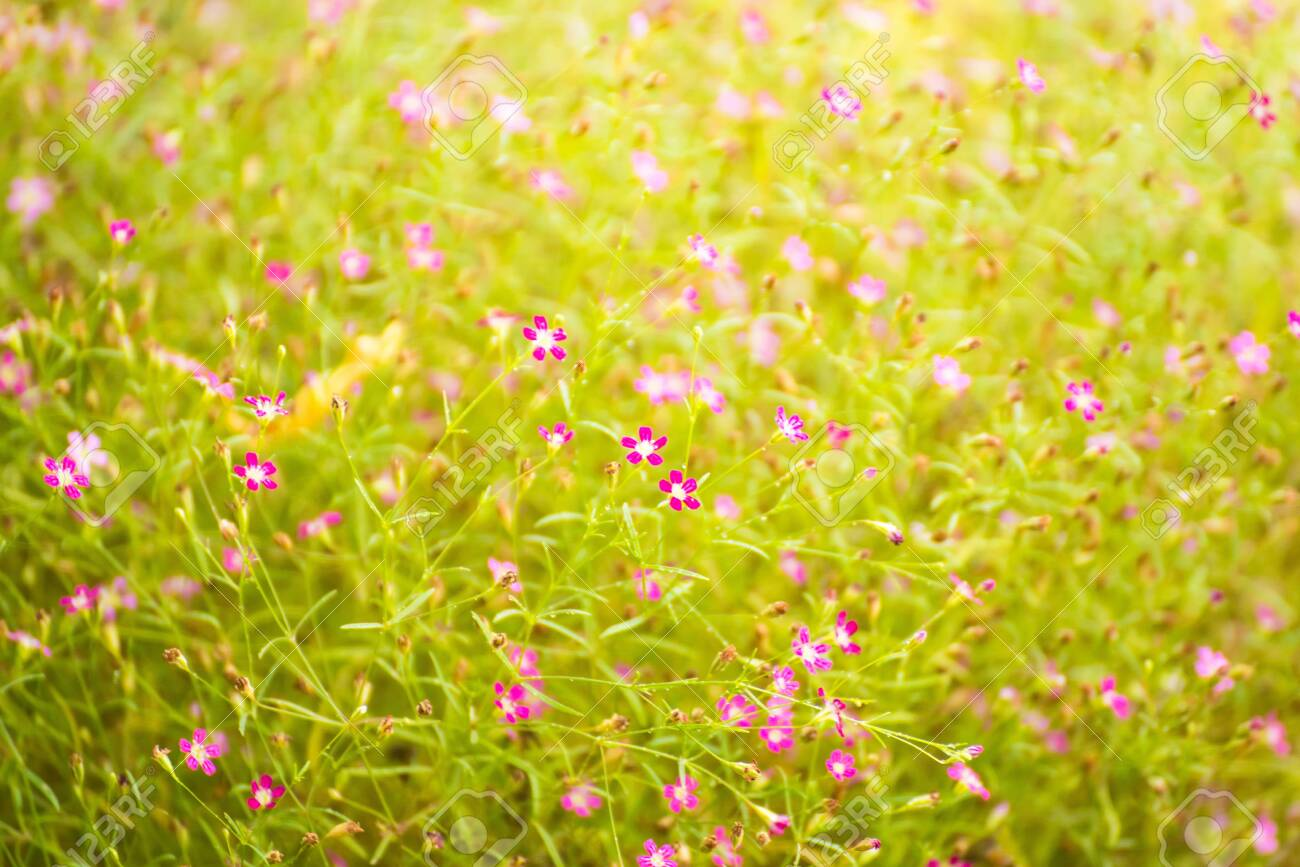 Beautiful flowers in the flower garden in the morning time.Thailand - 121237874