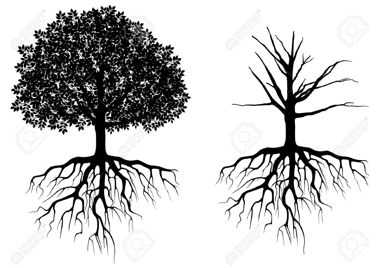 Arbre Avec Racine arbre avec des racines isolées sur blanc. vector illustration clip