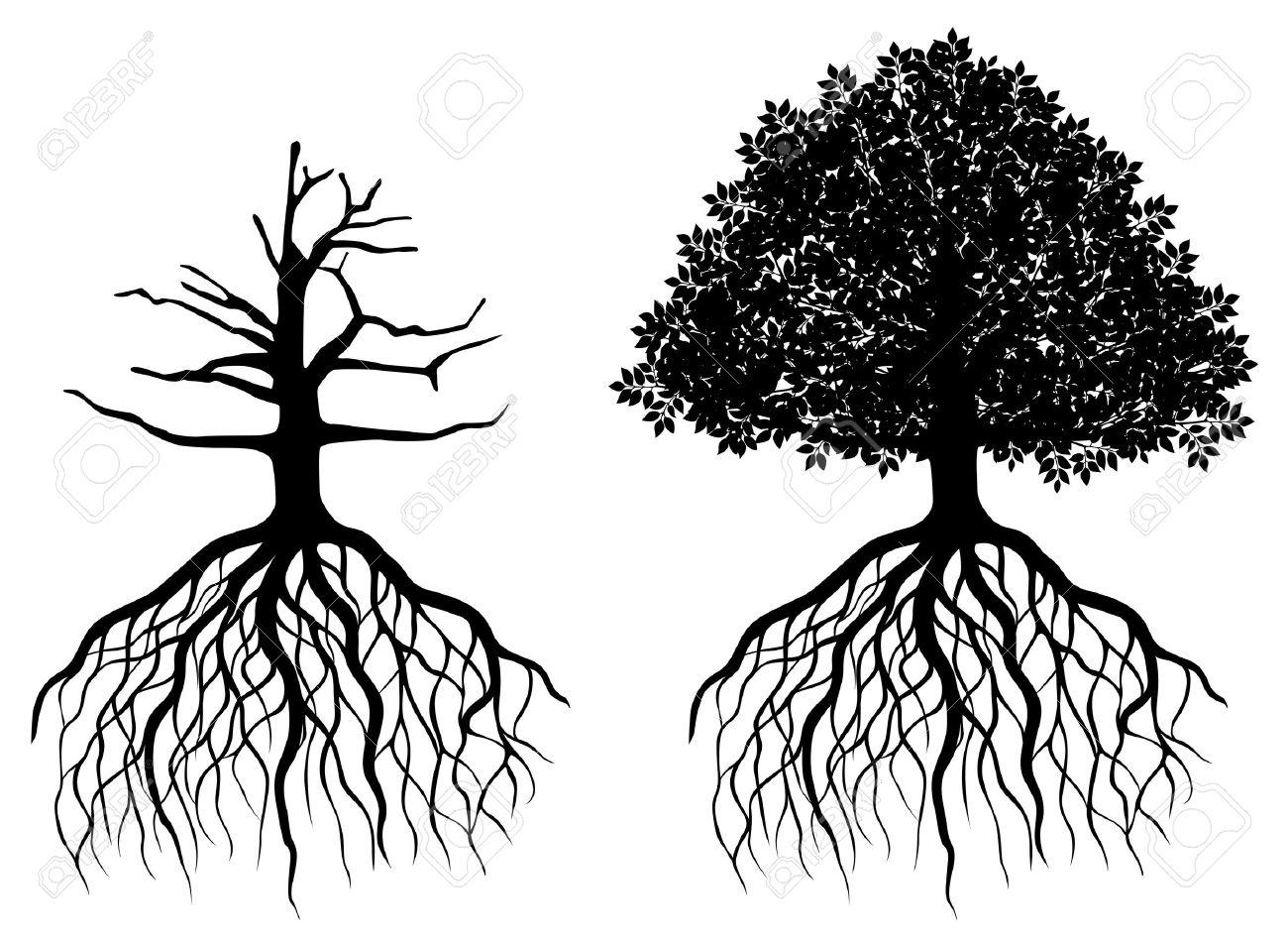oak tree silhouette stock photos u0026 pictures royalty free oak tree