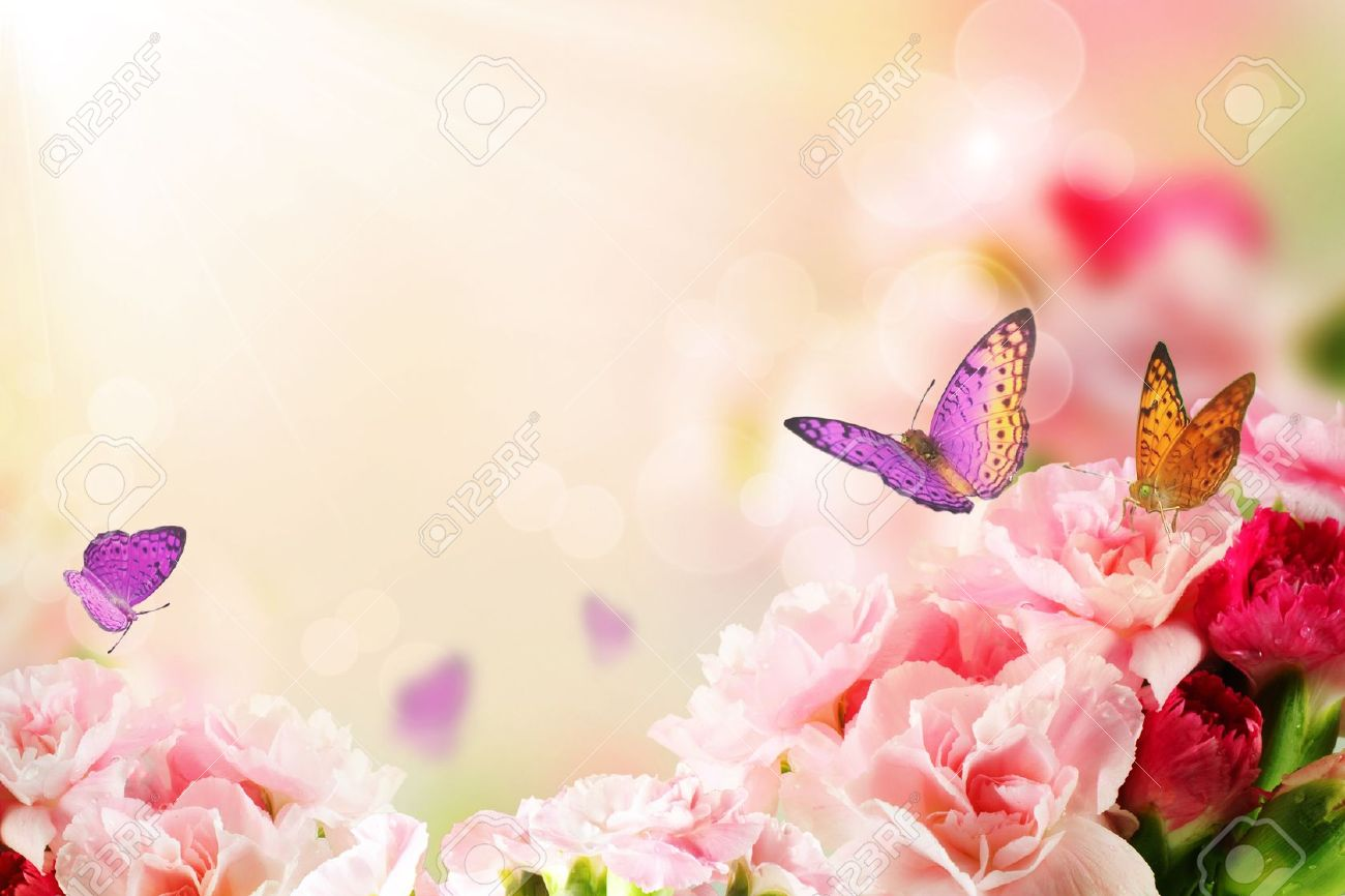 Beautiful Carnation Flowers And Butterflies In Sun Ray Morning Stock