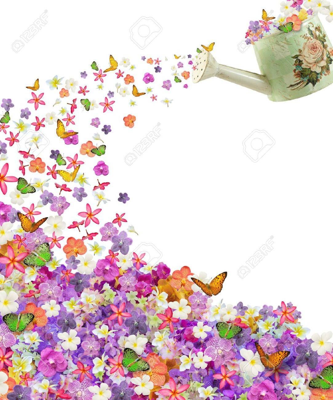 butterfly on many flowers - 16396404