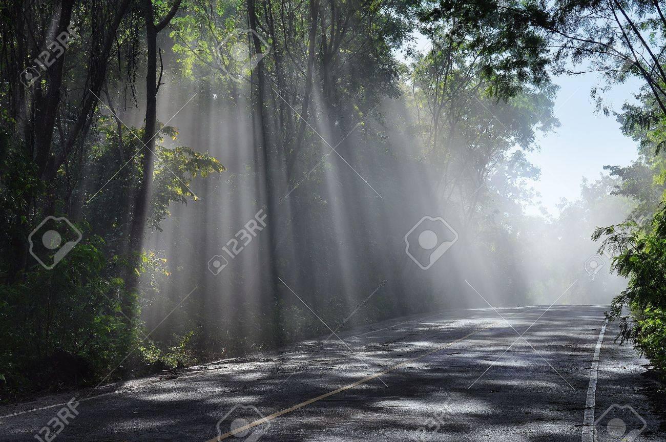 Forest road. Landscape for background - 16426594