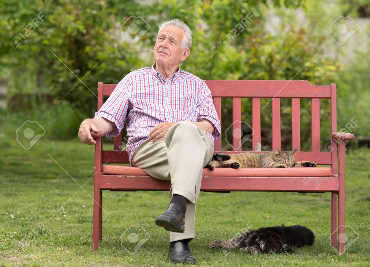 Old Man Sitting On Bench With His Pets And Looking In Sky